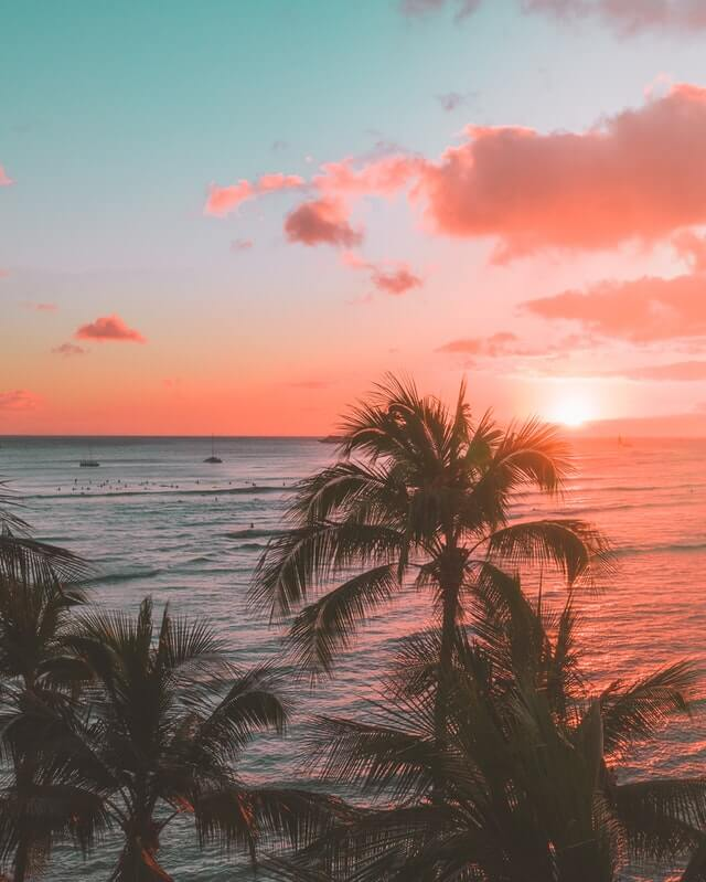 Image of palm trees in Oahu
